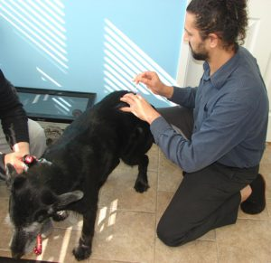 Veterinary Acupuncture Hudson Valley