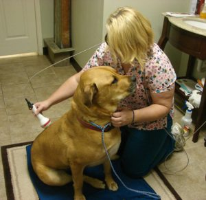 Veterinary Laser Therapy Hudson Valley